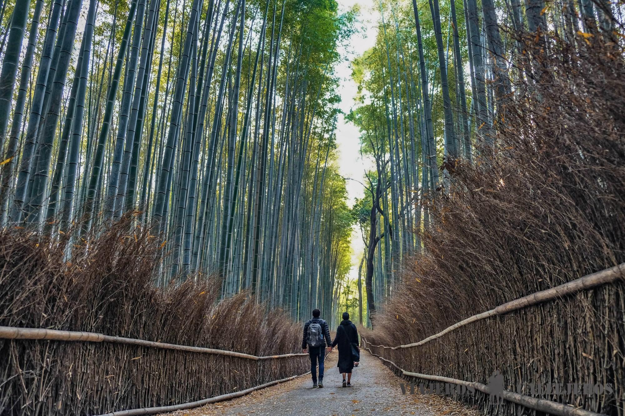 ENTREVISTA: Viajeros Callejeros - Viajeros por el Mundo