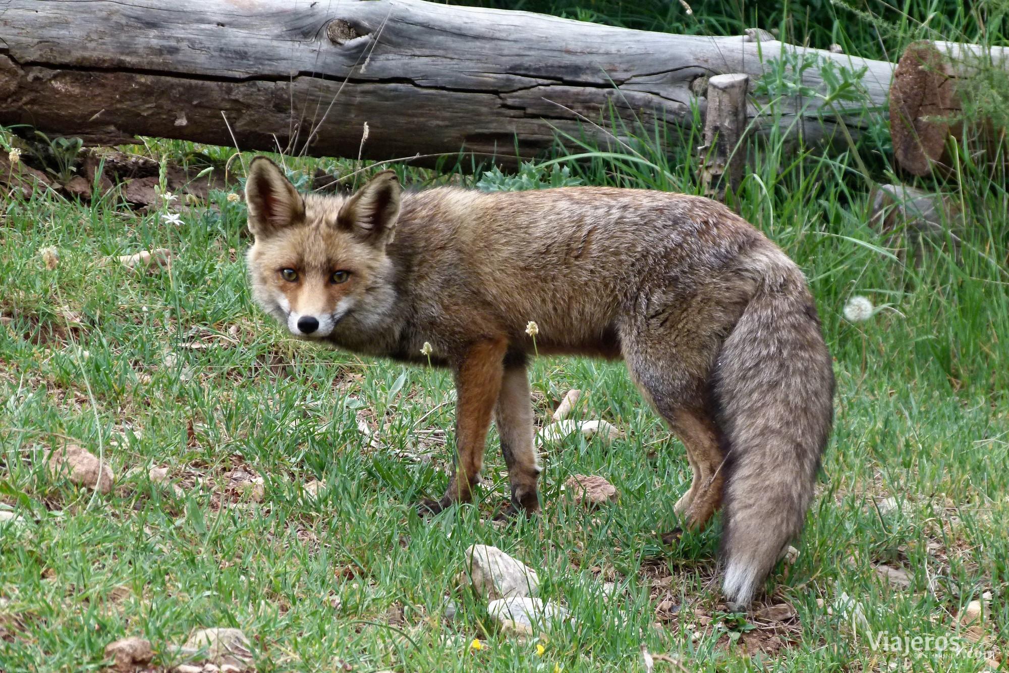 Fauna Parque Natural de Sierra de Cazorla