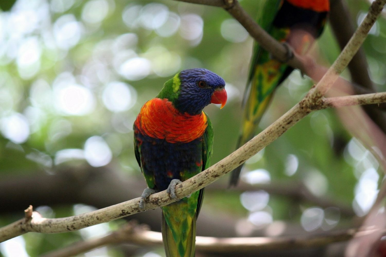 qué ver en Singapur Jurong Bird Park