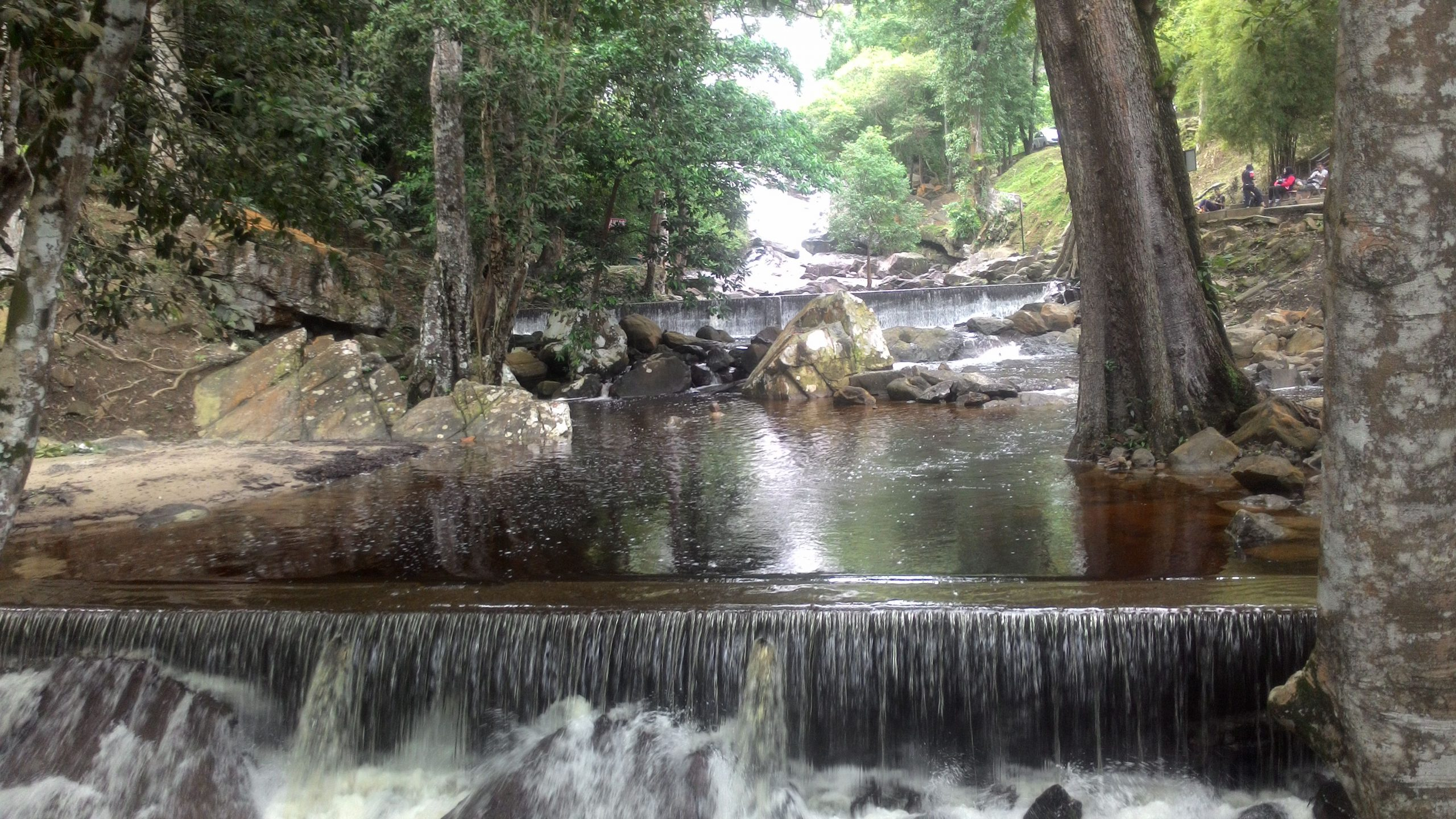 qué ver en Kuala Lumpur KL Forest Eco Park