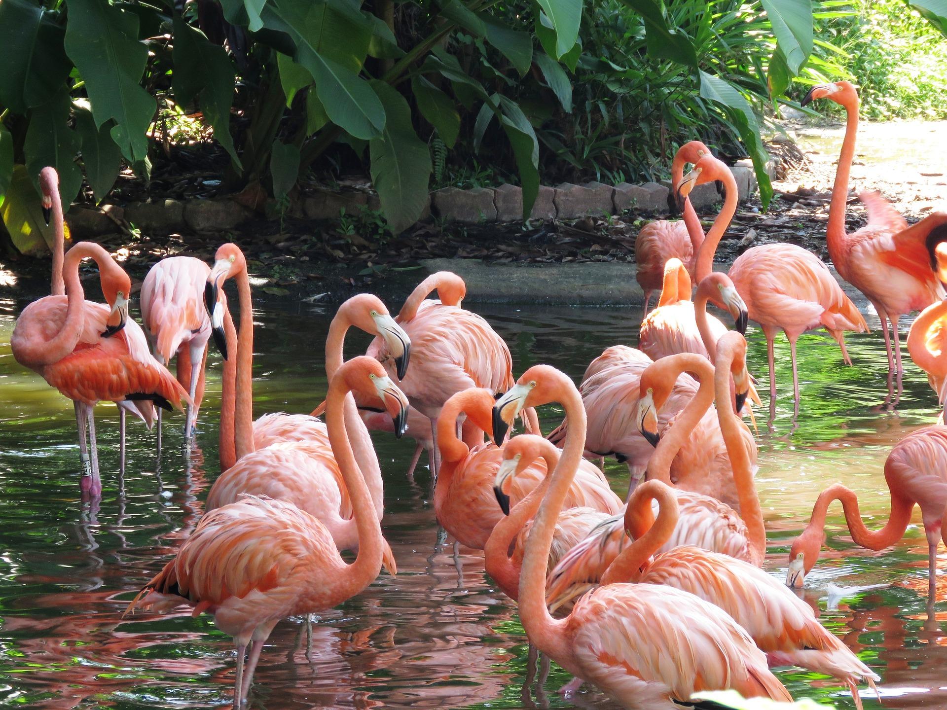 qué ver en Kuala Lumpur Jardín Botánico