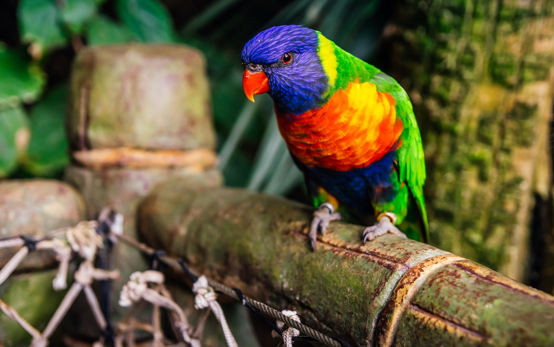 Parque de Aves Kuala Lumpur