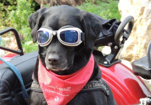 Claves para viajar con tu perro en vacaciones