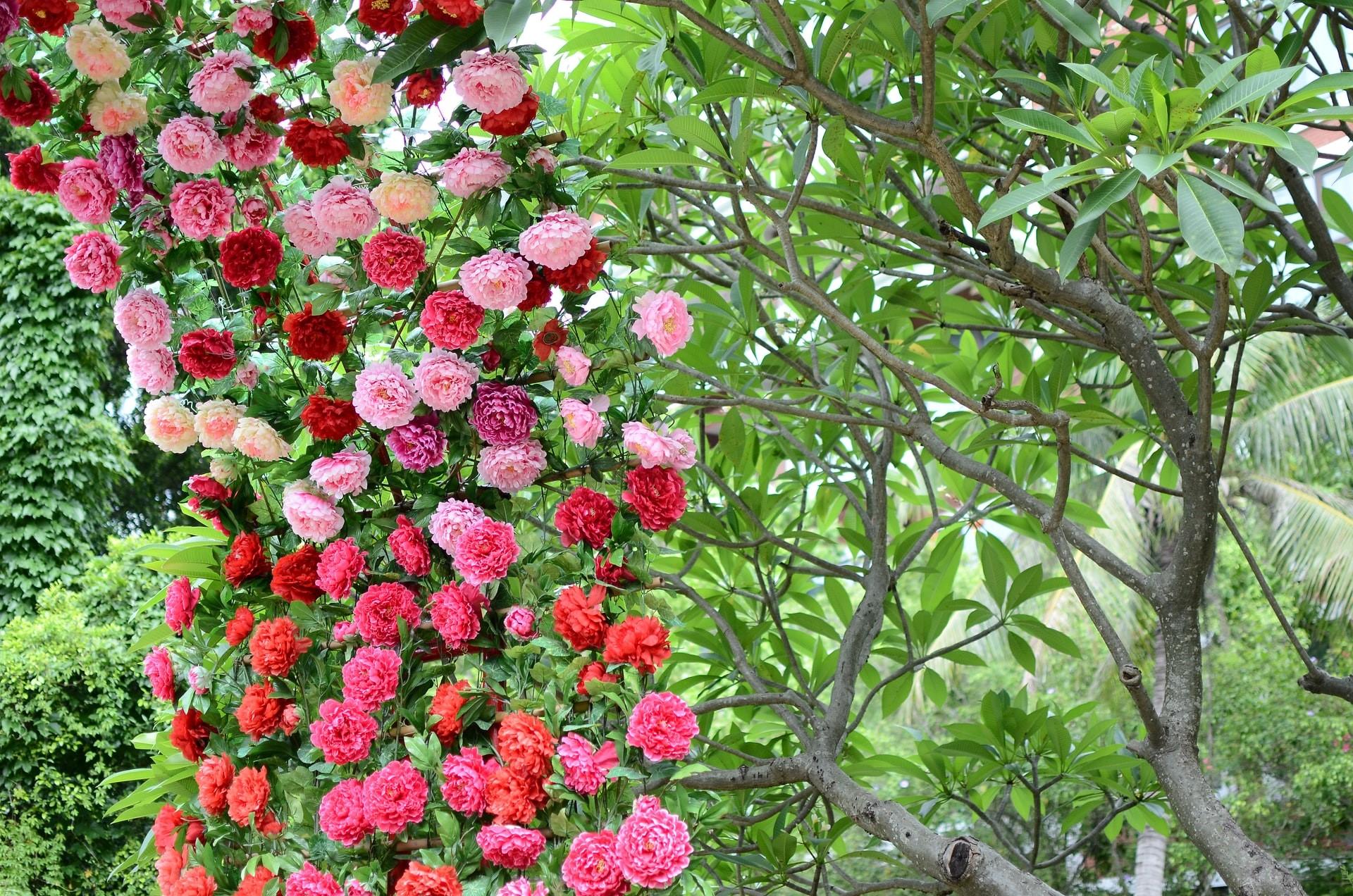 qué ver en Shenzhen Parque Lianhuashan