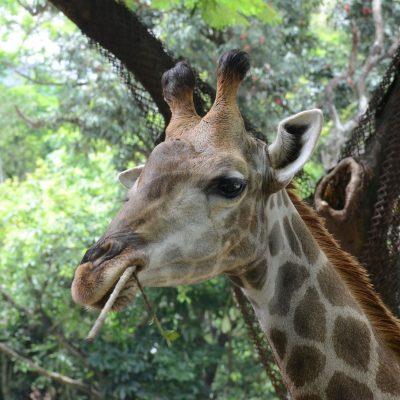 Safari Park de Shenzhen