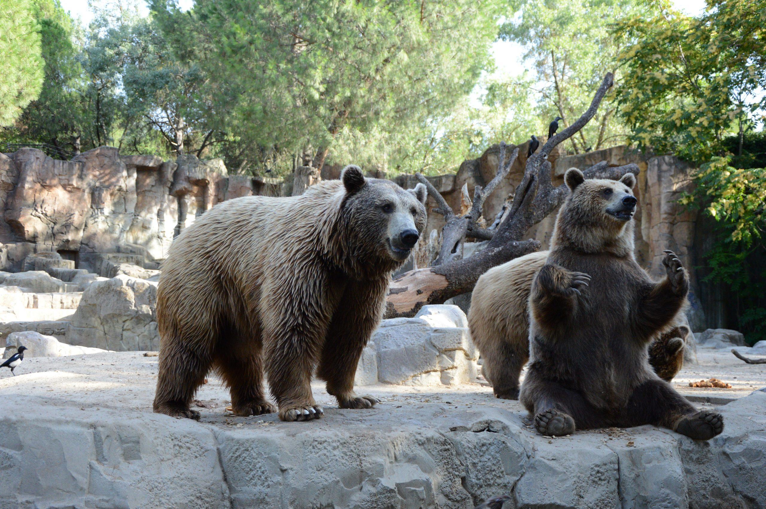 qué ver en Madrid Zoo Aquarium