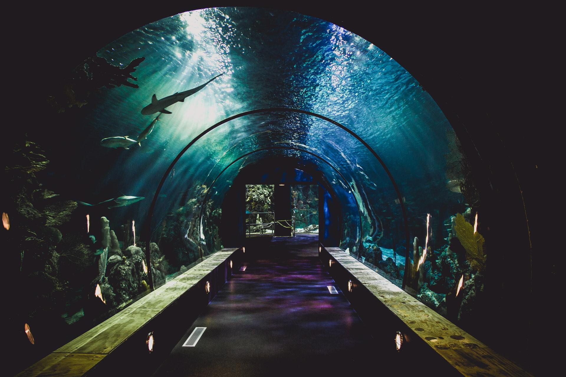 Zoo Aquarium de Madrid - Viajeros por el Mundo