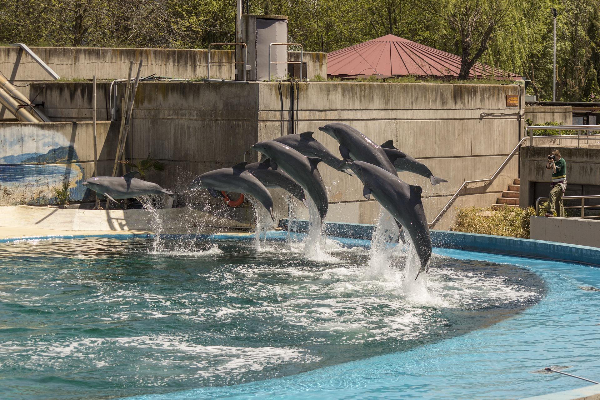 qué ver en Madrid Zoo Aquarium de Madrid