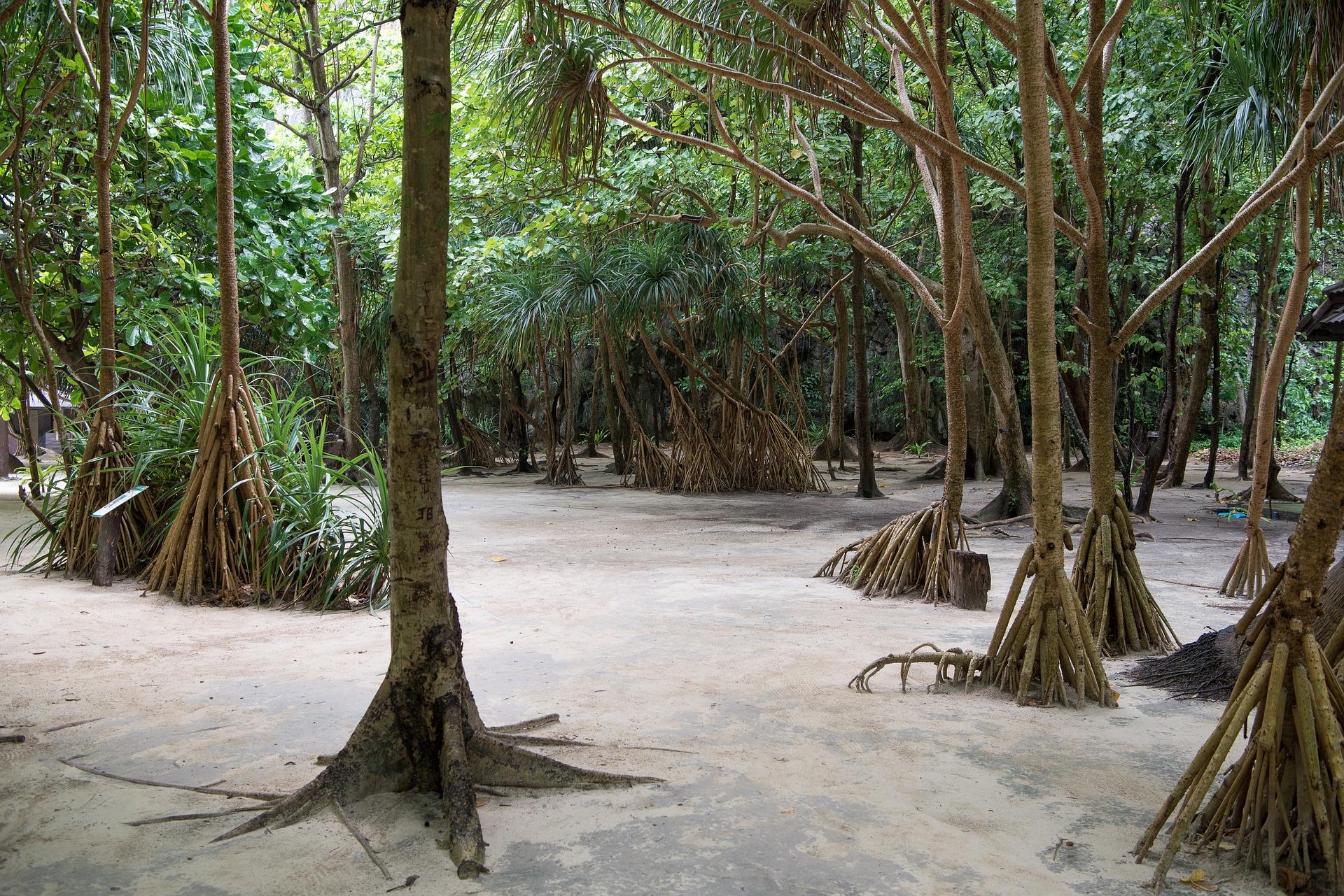 qué ver en Phuketo Islas Phi Phi
