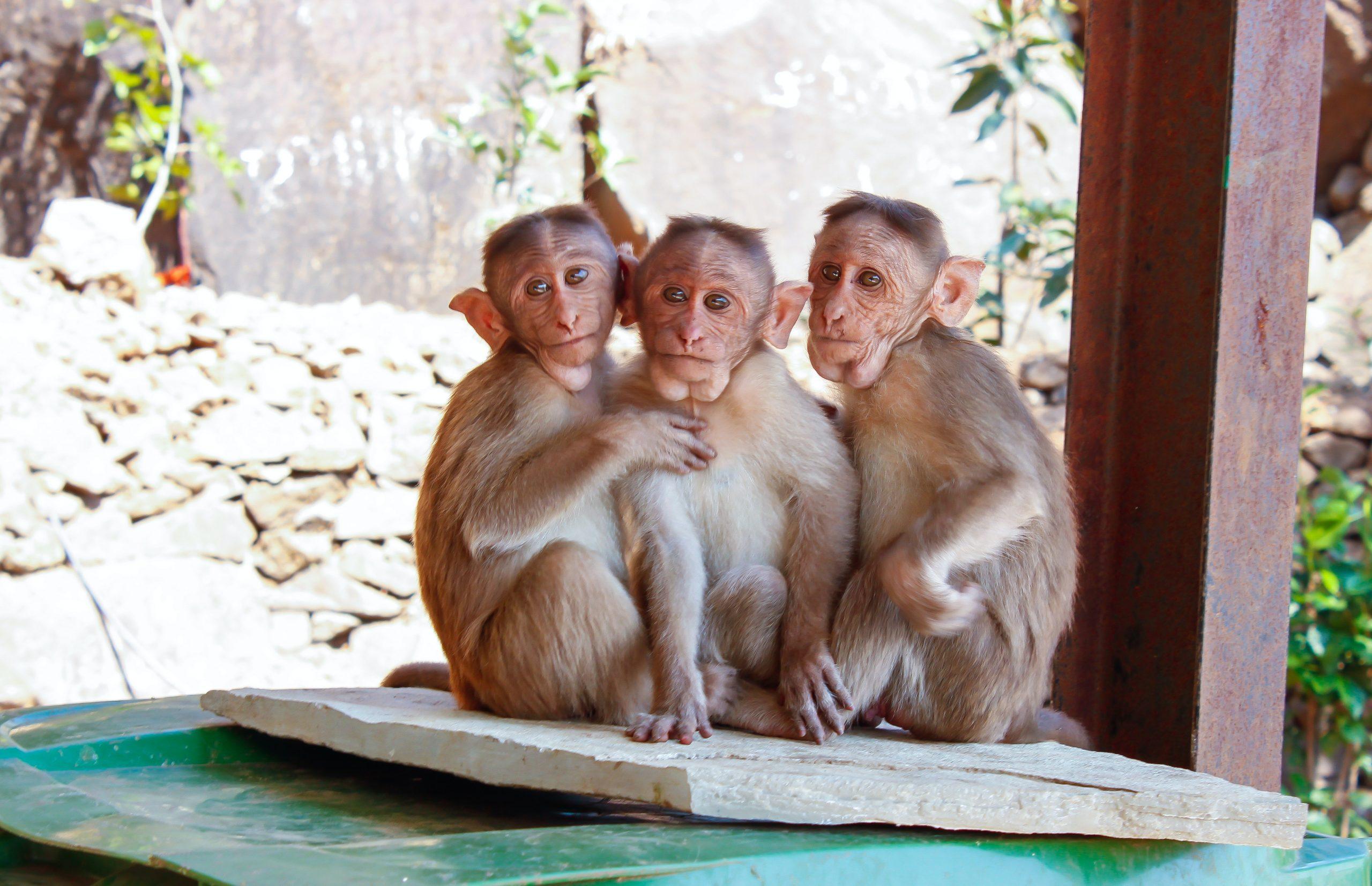 qué ver en Phuket Zoo de Phuket