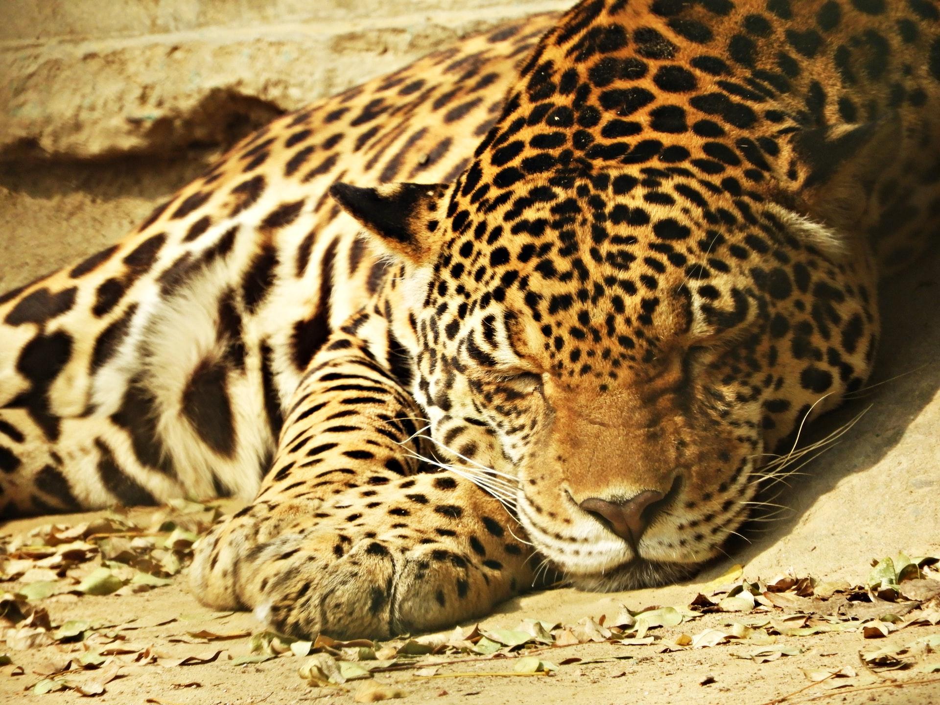 Parque Zoológico Nacional de Delhi - Viajeros por el Mundo
