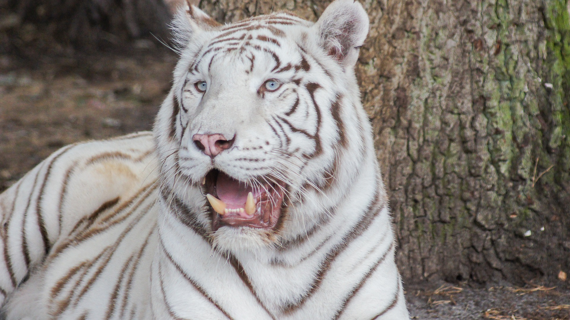 qué ver en Delhi Zoológico Nacional de Delhi