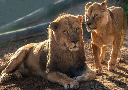 Parque Zoológico Nacional de Delhi