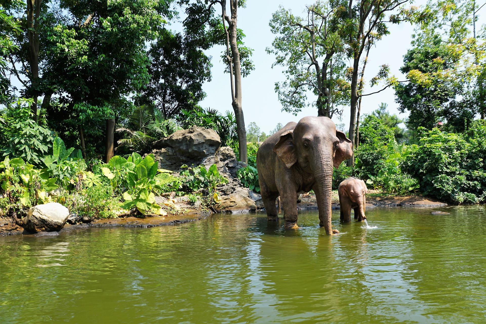 Chimelong Safari Park - Viajeros por el Mundo