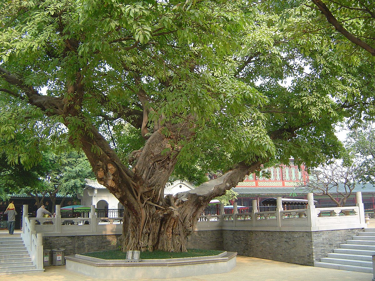 Baomo Garden - Viajeros por el Mundo