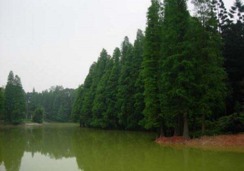 Jardín Botánico del sur de China