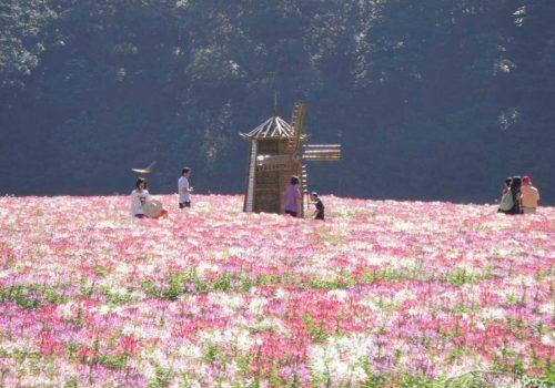 Shimen National Forest Park