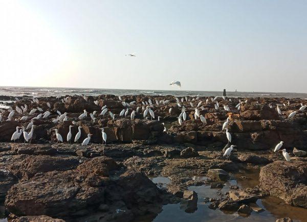 Playas en Mumbai