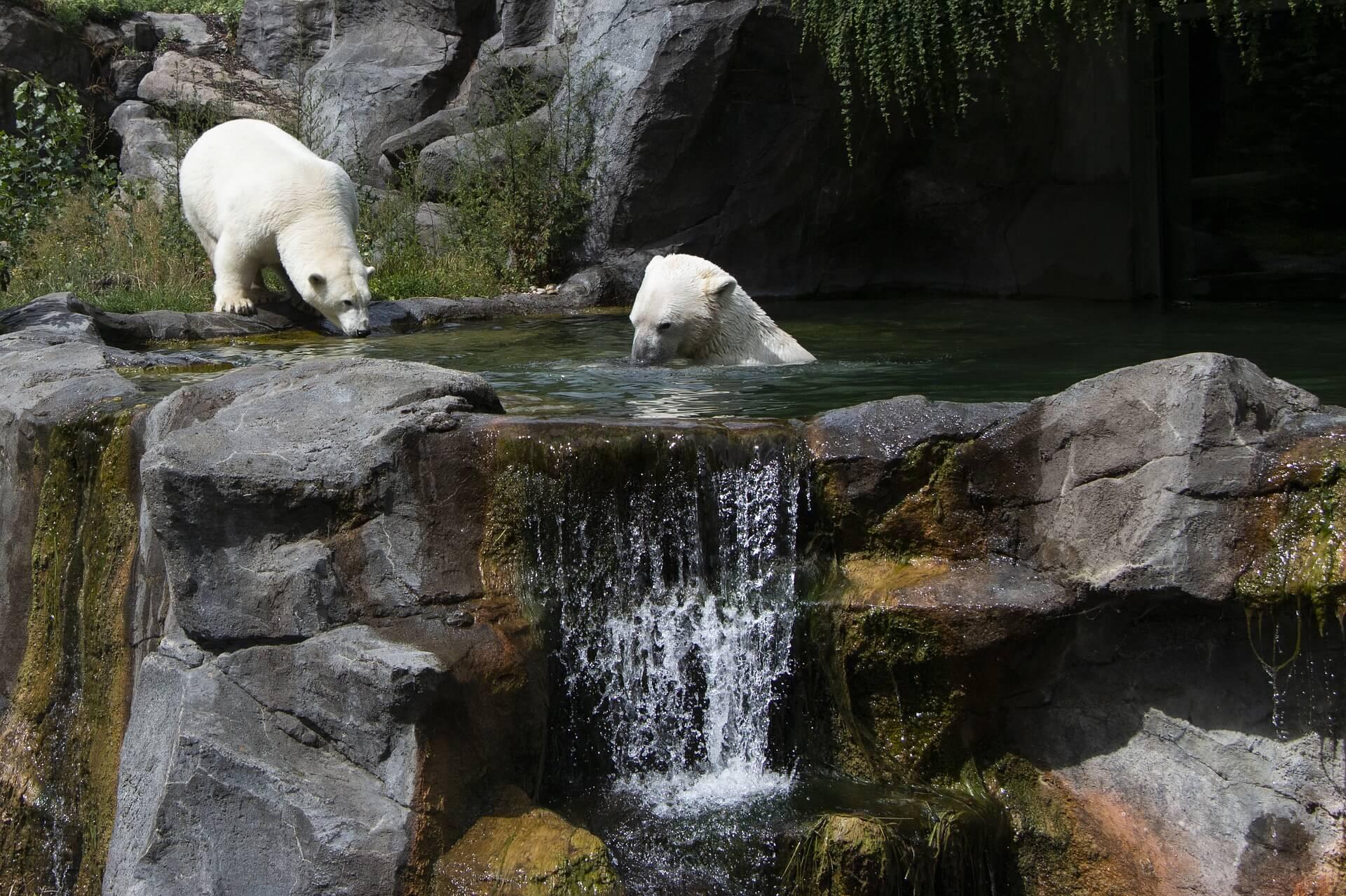 Zoológico de Schönbrunn, Viena - Viajeros por el Mundo