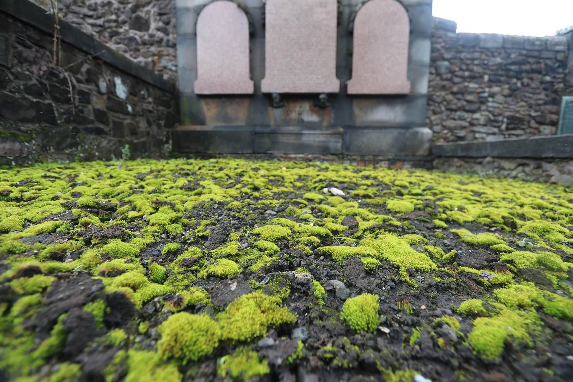 qué ver en Edimburgo Greyfriars